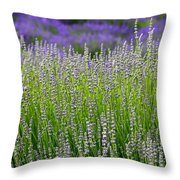 Lavender Layers Throw Pillow