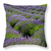 Lavender Rows Throw Pillow