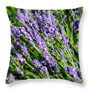 Lavender Square Throw Pillow