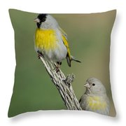 Lawrences Goldfinch Pair On Perch Throw Pillow