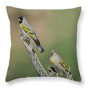 Lawrences Goldfinch Pair Perched Throw Pillow