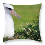Laysan Albatross Nesting Hawaii Throw Pillow