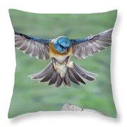 Lazuli Bunting In Flight Throw Pillow