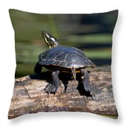 Lazy Day On A Log 6241 Throw Pillow