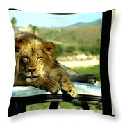 Lazy Lion With Poety Throw Pillow
