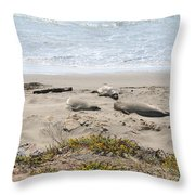 Lazy Seals Throw Pillow