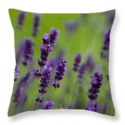 Lea Of Lavender Throw Pillow