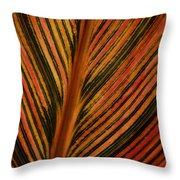 Cannas Plant Leaf Closeup Throw Pillow