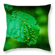 Leaf Gall Throw Pillow