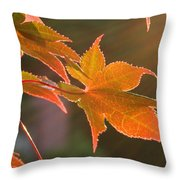 Leaf In The Sun Throw Pillow