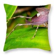 Leaf Katydid Throw Pillow