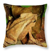 Leaf Litter Toad Bufo Typhonius Throw Pillow