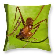 Leafcutter Ant Cutting Leaf Costa Rica Throw Pillow