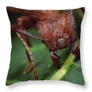 Leafcutter Ant Cutting Papaya Leaf Throw Pillow