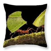 Leafcutter Ants Carrying Leaves Costa Throw Pillow