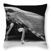 Leafhopper Throw Pillow by David M. Phillips