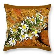 Leafy-bract Asters In Wildcat Canyon Trail Along Kolob Terrace Road In Zion National Park-utah Throw Pillow