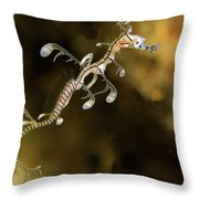 Leafy Sea Dragon Hatchling Rapid Bay Throw Pillow by John Lewis