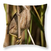 Least Bittern Pictures 14 Throw Pillow