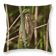 Least Bittern Pictures 22 Throw Pillow