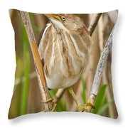 Least Bittern Pictures 35 Throw Pillow