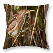 Least Bittern Pictures 7 Throw Pillow