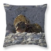 Least Tern Hatchling Throw Pillow
