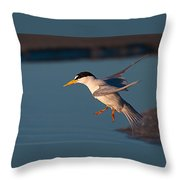Least Tern In Flight Throw Pillow