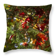 Leaves On Evergreen Throw Pillow
