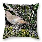 Lecontes Thrasher In Bush Throw Pillow