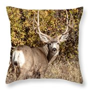 Legend Of The Fall Throw Pillow