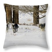 Legends Of The Lamar Valley Throw Pillow