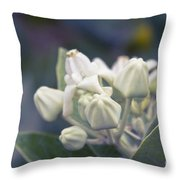Lei Pua Kalaunu - Crown Flower - Calotropis Gigantea - Asclepiad Throw Pillow