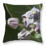 Lei Pua Kalaunu - Crown Flower - Calotropis Gigantea - Asclepiadaceae Throw Pillow