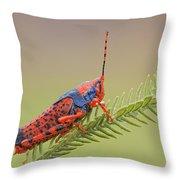 Leichhardts Grasshopper On Pityrodia Throw Pillow