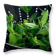 Lemon Verbena Herbs Throw Pillow