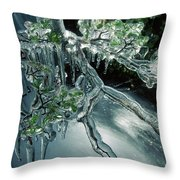 Lenga Beech Nothofagus Pumilio Throw Pillow
