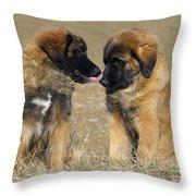 Leonberger Puppies Throw Pillow