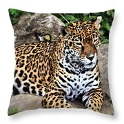 Leopard At Rest Throw Pillow