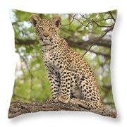 Leopard Cub Gaze Throw Pillow