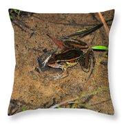 Leopard Frog Throw Pillow