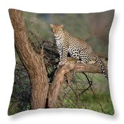Leopard Panthera Pardus Sitting Throw Pillow