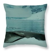 Leopard Seal Hauled Out Throw Pillow