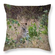 Leopard Sits Throw Pillow