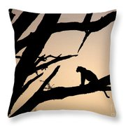 Leopard Sitting In A Tree Throw Pillow