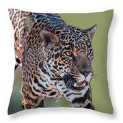 Jaguar Walking Portrait Throw Pillow