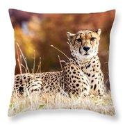 Leopard Watching Throw Pillow