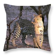 Leopard With African Wild Cat Kill Throw Pillow