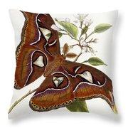 Lepidoptera Throw Pillow by Edward Donovan