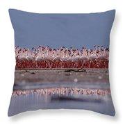 Lesser Flamingos In Mass Courtship Lake Throw Pillow